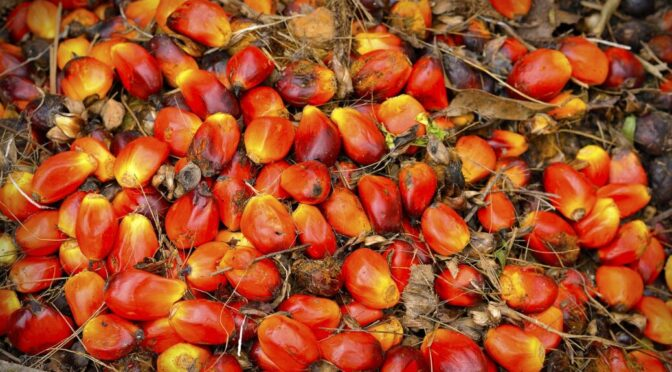 Maintaining biodiversity and managing oil palm expansion