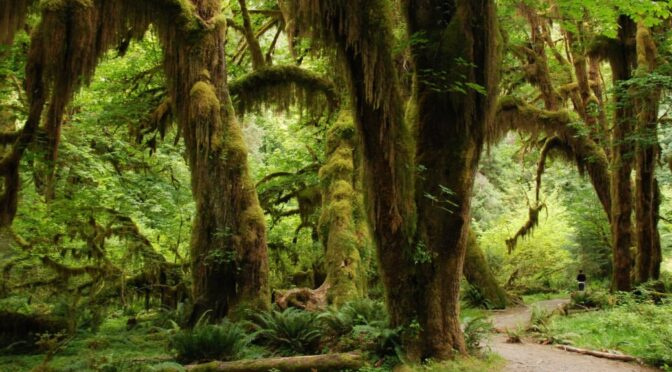 Fixing carbon in subtropical forest to mitigate climate change