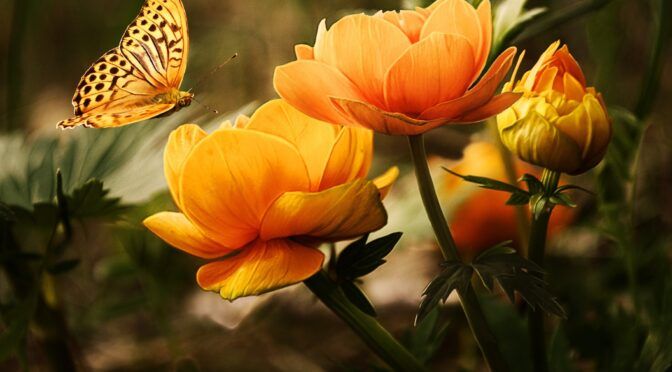 https://www.pexels.com/photo/orange-flower-with-butterfly-87452/