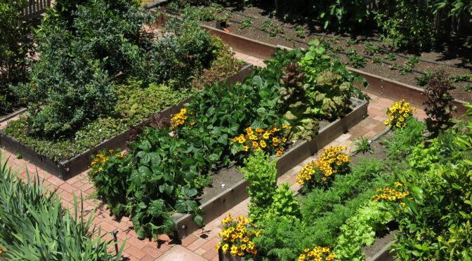 Wie können wir die politischen Rahmenbedingungen für die Reduzierung des Pestizideinsatzes verbessern?