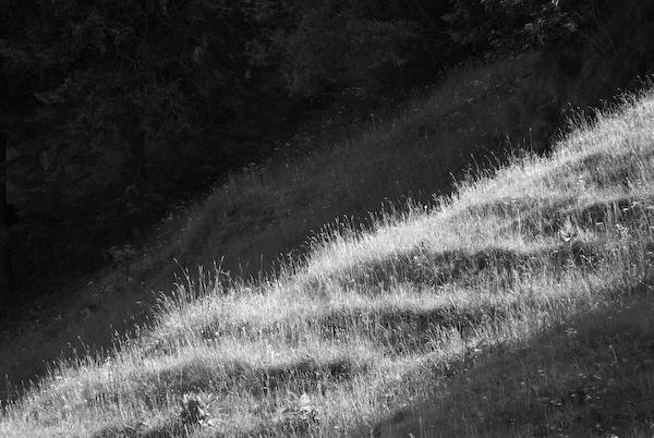 Gras bei Rigi Klösterli