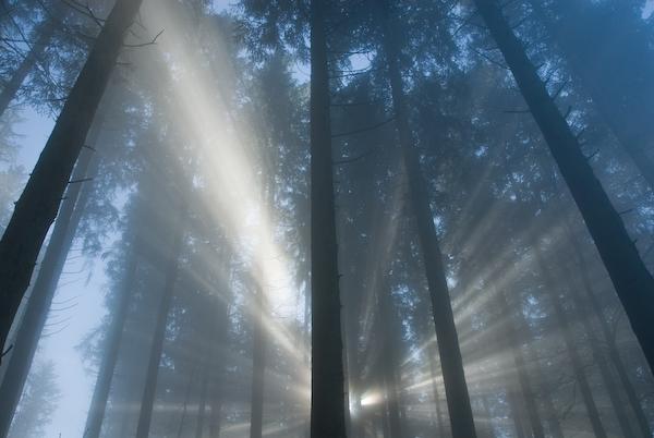 Nebelmagie am Etzel