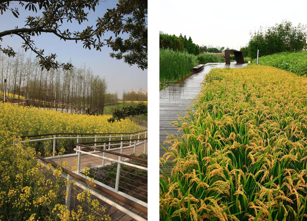 Shangai-Houtan-Park-19