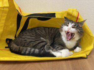 «Home-Office-Wach-Katze», welche auf Stefan Benz und die ETH-Arbeit gut aufpasst...